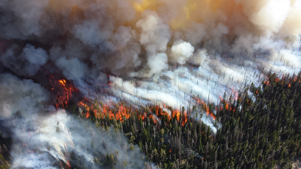 Forest fires, like the pictured 2013 Alder Fire on the southern end of Yellowstone National Park, will become more frequent in future as temperatures soar higher due to global warming. Image courtesy of NPS Climate Change Response